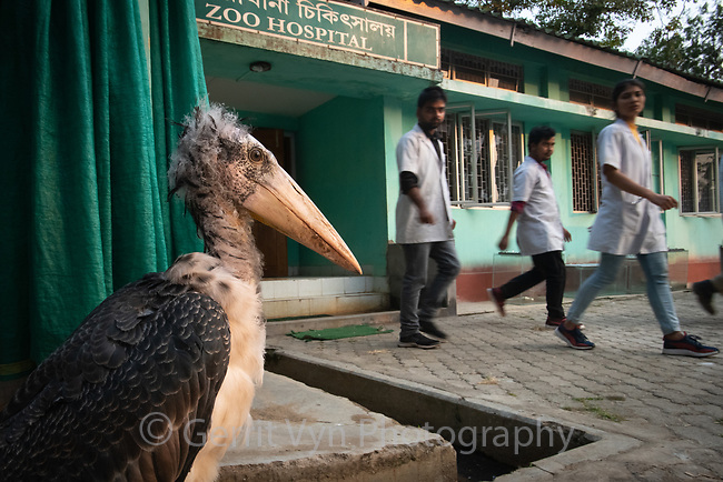 At the Assam state zoo, chicks that fall from nests are rescued in partnership with the local police and Kamrup district administration for rehabilitation and release. Guwahati, Assam, India.