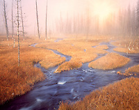 Meadow with fall colored grass and hotspring stream. Yellowstone National Park, Wyoming