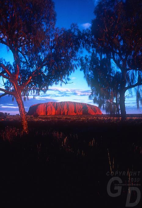 Sunset at Ayers Rock, Uluru National Park, framed by Central Australia Desert Oaks