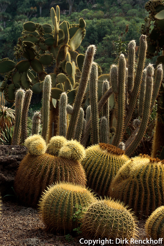 Spanien, Kanarische Inseln, Gran Canaria, im Jardin Canario bei Tafira