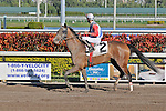 07 February 2010:  Great Inspiration with jockey Eddie Castro in the Seventh race at Gulfstream Park in Hallandale Beach, FL.