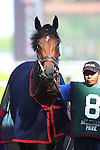 July 11, 2015: Delaware Oaks contender Peace and War, trained by Graham Motion, enters the paddock. Calamity Kate, Edgar Prado up,                               wins the Grade III Delaware Oaks, one and one sixteenth miles for 3 year old fillies at Delaware Park in Stanton DE. Trainer is Kelly Breen. Joan Fairman Kanes/ESW/CSM