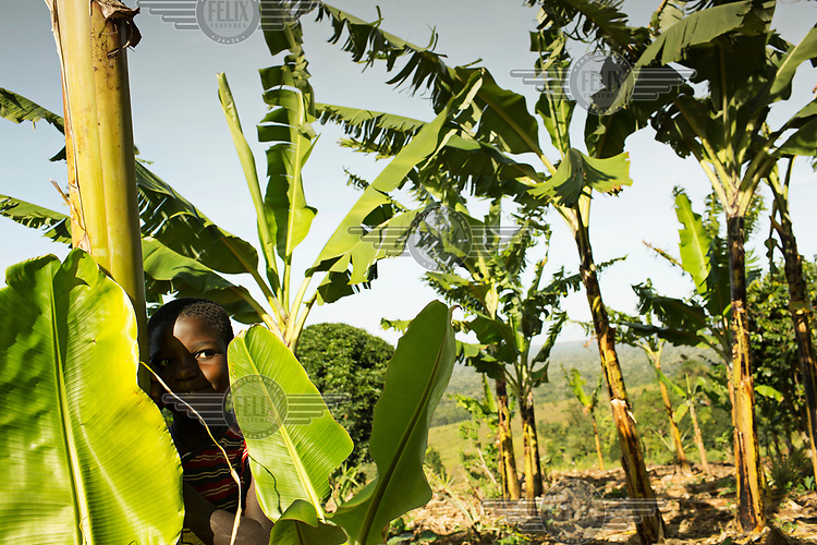 Christine (5) stands beside a banana plant on land farmed by her mother.