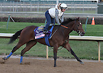 Candrea, trained by Bob Baffert and to be ridden by Martin Garcia., exercises in preparation for the 2011 Breeders' Cup at Churchill Downs on October 31, 2011.