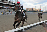 10 November 27: To Honor and Serve (no. 5),  ridden by John Velazquez and trained by William Mott, wins the 97th running of the grade 2 Remsen Stakes for two year olds at Aqueduct Race Track in Ozone Park, New York.  (Bob Mayberger/Eclipse Sportswire)