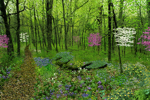 Spring woods series. Path through the forest in spring