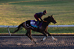 November 4, 2020: New Mandate, trained by trainer Ralph M. Beckett, exercises in preparation for the Breeders' Cup Juvenile Turf at Keeneland Racetrack in Lexington, Kentucky on November 4, 2020. Gabriella Audi/Eclipse Sportswire/Breeder's Cup/CSM