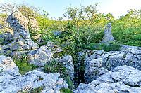 France, Ardèche (07), Berrias-et-Casteljau et les Vans, bois de Païolive