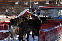 Local Dion Benjamin holds on to two dropped dogs at the Shageluk checkpoint on Saturday March 9, 2013...Iditarod Sled Dog Race 2013..Photo by Jeff Schultz copyright 2013 DO NOT REPRODUCE WITHOUT PERMISSION
