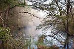 New Jersey Pinelands National Reserve, NJ, USA