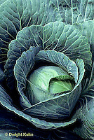 HS37-018b  Cabbage - Perfect Ball variety