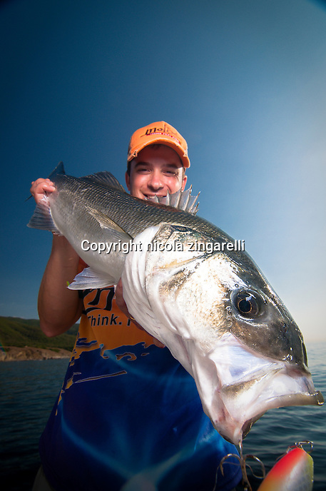 The Sea Bass is a very popular fish among recreational fishermen.