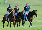 Animal Kingdom, winner of the 137th Kentucky Derby, continues to train for the Belmont Stakes at the Fair Hill Training Center on June 1, 2011 in Fair Hill, Maryland.