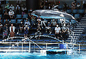 Dolphins perform at the Aqua Park Shinagawa aquarium after two months suspension