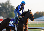 October 23, 2015: Ralis, trained by Doug O'Neill, and owned by Reddam Racing LLC., is cross entered in the Breeder's Cup Sentient Jet Juvenile $2,000,000, and has second preference in the Breeder's Cup Juvenile Turf $1,000,000.  Candice Chavez/ESW/CSM
