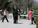 April 23, 2014: Tsunami and Sarah Cousins during the first horse inspection at the Rolex Three Day Event in Lexington, KY at the Kentucky Horse Park.  Candice Chavez/ESW/CSM
