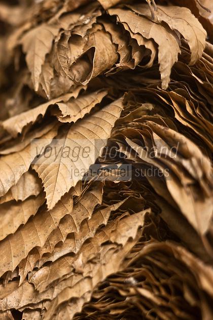Europe/France/Poitou-Charentes/79/Deux-Sèvres/Villemain: Fromagerie à la ferme de Paul Gorgelet: Le Petit Boisselage - les feuilles qui servent à l'affinage du Mothais sur Feuille dans la cave d'affinage