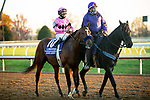 November 7, 2020 : Maximum Security gets ready for the Longines Classic on Breeders' Cup Championship Saturday at Keeneland Race Course in Lexington, Kentucky on November 7, 2020. Dan Heary/Breeders' Cup/Eclipse Sportswire/CSM