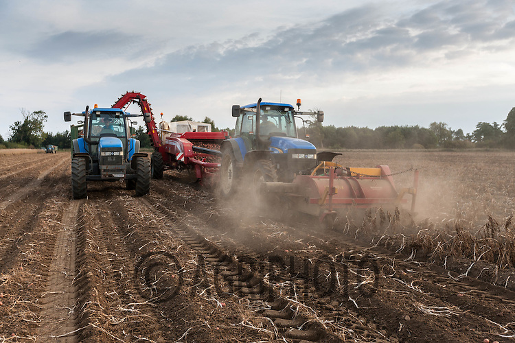 Lifting potatoes in dry conditions in Lincolnshire Autumn 2013<br /> Picture Tim Scrivener 07850 303986