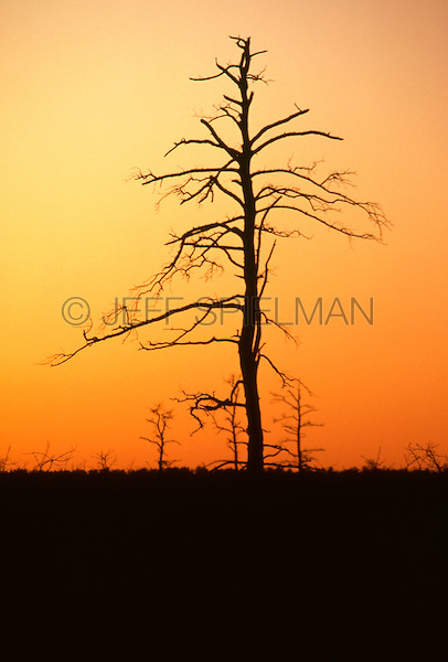Original Image Photographed in March 1983 0n Kodachrome Transparency Film.<br />