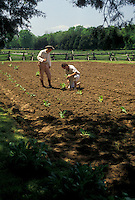 AJ4209, George Washington, farming, birthplace, tobacco, Popes Creek Plantation, George Washington Birthplace National Monument, Virginia, Interpreters planting tobacco in a garden at Popes Creek Plantation in George Washington Birthplace Nat'l Monument in the state of Virginia.
