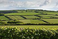 Field at Wheddon Cross, Somerset.