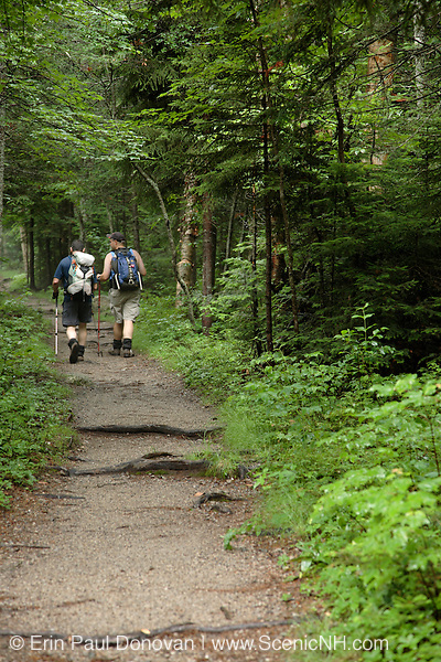 Day hikers make their way along the Zealand Trail during the summer months in the White Mountains, New Hampshire USA. Parts of this trail follows the old Zealand Valley Railroad, which was a logging railroad in operation from 1886-1897(+/-)