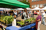 Hollywood District Farmers Market, Portland, Oregon