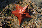 Sea stars by Frank Balthis