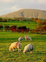 Parlick Fell. Lancashire.
