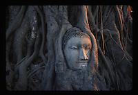 Wat Phra Mahathat, Buddha head in tree.