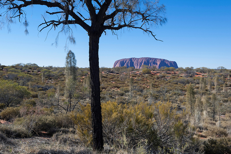 Uluru, formerly known as Ayers Rock, Central Australia, Northern Territory, Australia.