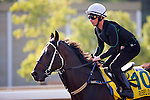 SHA TIN,HONG KONG-DECEMBER 09: Rebel Dane,trained by <br /> Gary Portelli,exercises in preparation for the Hong Kong at Sha Tin Racecourse on December 9,2016 in Sha Tin,New Territories,Hong Kong (Photo by Kaz Ishida/Eclipse Sportswire/Getty Images)