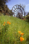 Kennedy Tailing Wheel No. 4, poppy flowers in spring...Built in 1914, this early-day anti-polution system once consisted of four steam-powered wheels to lift the mining debris from the Kennedy Mine's mill to a holding pond over a hill and a half mile away...The debris were diverted from the local waterways to keep from polluting California's waterways...The 58 foot diameter wheels were once covered and operated 24 hours a day from December of 1914 to their closing in 1942 during World War II.