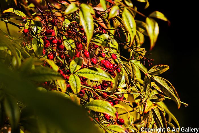 Berries, Newport Beach, CA