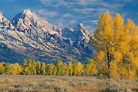 Cottonwoods near Gros Ventre River<br />   and the Grand Teton<br /> Grand Teton National Park<br /> Rocky Mountains,  Wyoming