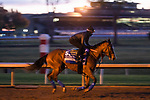 November 5, 2020: Gamine, trained by trainer Bob Baffert, exercises in preparation for the Breeders' Cup Filly & Mare Sprint at Keeneland Racetrack in Lexington, Kentucky on November 5, 2020. Scott Serio/Eclipse Sportswire/Breeders Cup/CSM