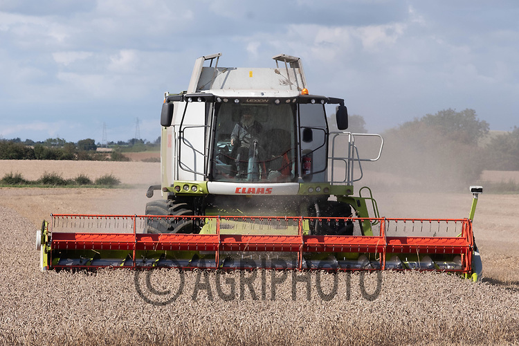 4.9.2020 Harvesting Spring Wheat in Lincolnshire<br /> ©Tim Scrivener Photographer 07850 303986<br />      ....Covering Agriculture In The UK.