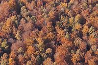 Deutschland, Schleswig- Holstein, Sachsenwald, Wald, Baeme,  Herbstlaub, Herbst