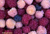 HS34-009b  Raspberries - mixed varieties