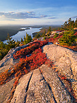 Low sweet blueberry lines the granite ledges along Beech Mountain overlooking Long Pond in Acadia National Park, Maine, USA