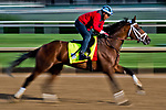 LOUISVILLE, KENTUCKY - MAY 01: State of Honor, owned by Conrad Farms and trained by Mark E. Casse, exercises in preparation for the Kentucky Derby during Kentucky Derby and Oaks preparations at Churchill Downs on May 1, 2017 in Louisville, Kentucky. (Photo by Scott Serio/Eclipse Sportswire/Getty Images)