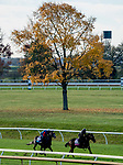 October 31, 2020: Outadore, trained by trainer Wesley A. Ward, exercises in preparation for the Breeders' Cup Juvenile Turf and Campanelle, trained by trainer Wesley A. Ward, exercises in preparation for the Breeders' Cup Juvenile Fillies Turf at Keeneland Racetrack in Lexington, Kentucky on October 31, 2020. Scott Serio/Eclipse Sportswire/Breeders Cup/CSM