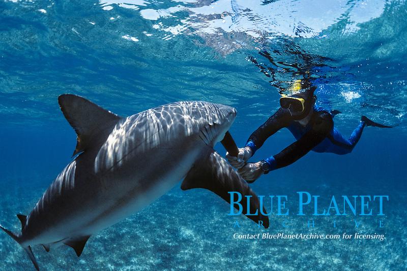 Diver uses shark billy to fend off Caribbean Reef Shark (Carcharhinus perezii). Bahamas, Caribbean Sea.