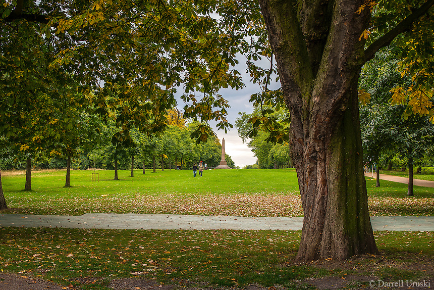 Scenic photograph of Hyde Park in London, England. <br /> The colours of the fall season had just begun in the park, and the golden coloured leaves were just starting to fall onto the tree lined grass in the park.