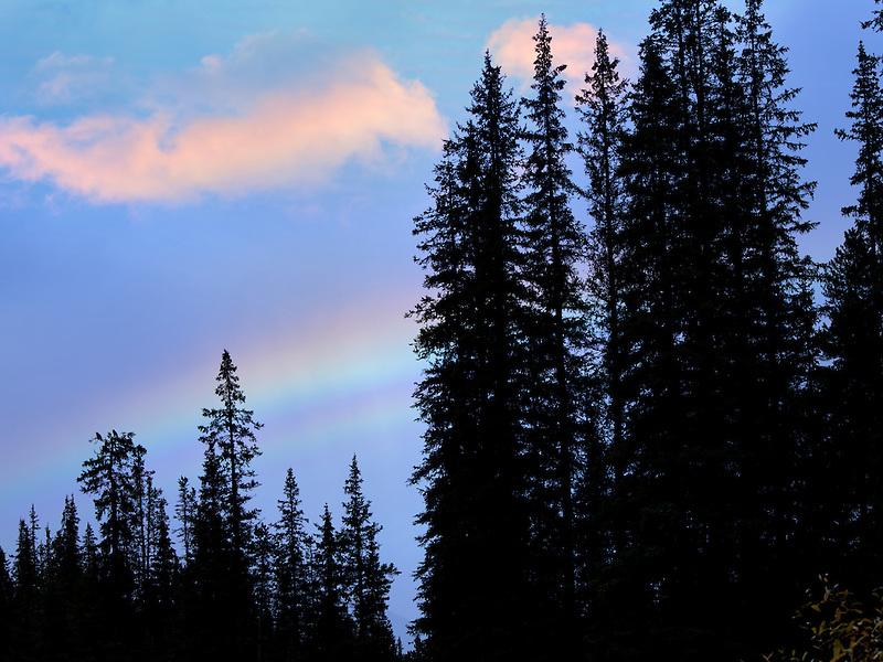 Rainbow over trees. Banff National Park, Canada