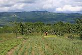 Ökolandbau in Georgien: Die Berge hinter Marikas Feldern gehören zu Süd-Ossetien, jener Provinz, um die Russland und Georgien im Sommer 2008 Krieg führten / Organic farming in Georgia: The mountains behind Marikas fields belong to South Ossetia, the region where the Russian-Georgian war took place in 2008.