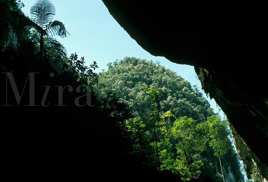 Entrance of Deer Cave in limestone formation in Tropical Rain Forest, Gunung Mulu Nat. Park, Malaysia, Borneo, Sarawak