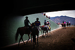 Horses are lead onto the track for the 2013 running of the Strub Stakes at Santa Anita Park in Arcadia, California on February 02, 2013.