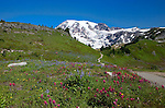 The Alta Vista trail climbs to impressive views from the Paradise Visitor Center in Mount Rainier National Park.  A lone hiker crosses the hillside.